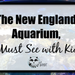the new England aquarium is a must see when you visit New England