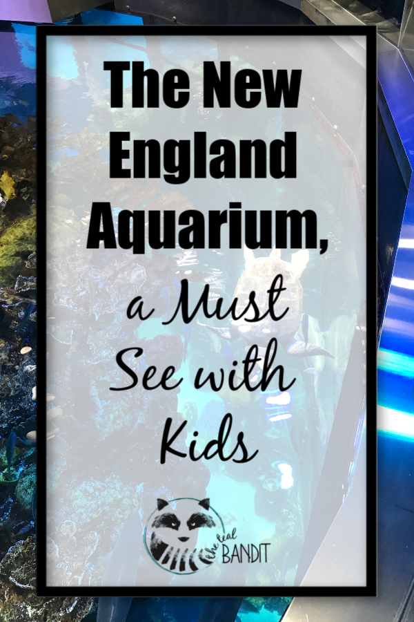Pinterest pin for what you'll see at the new england aquarium