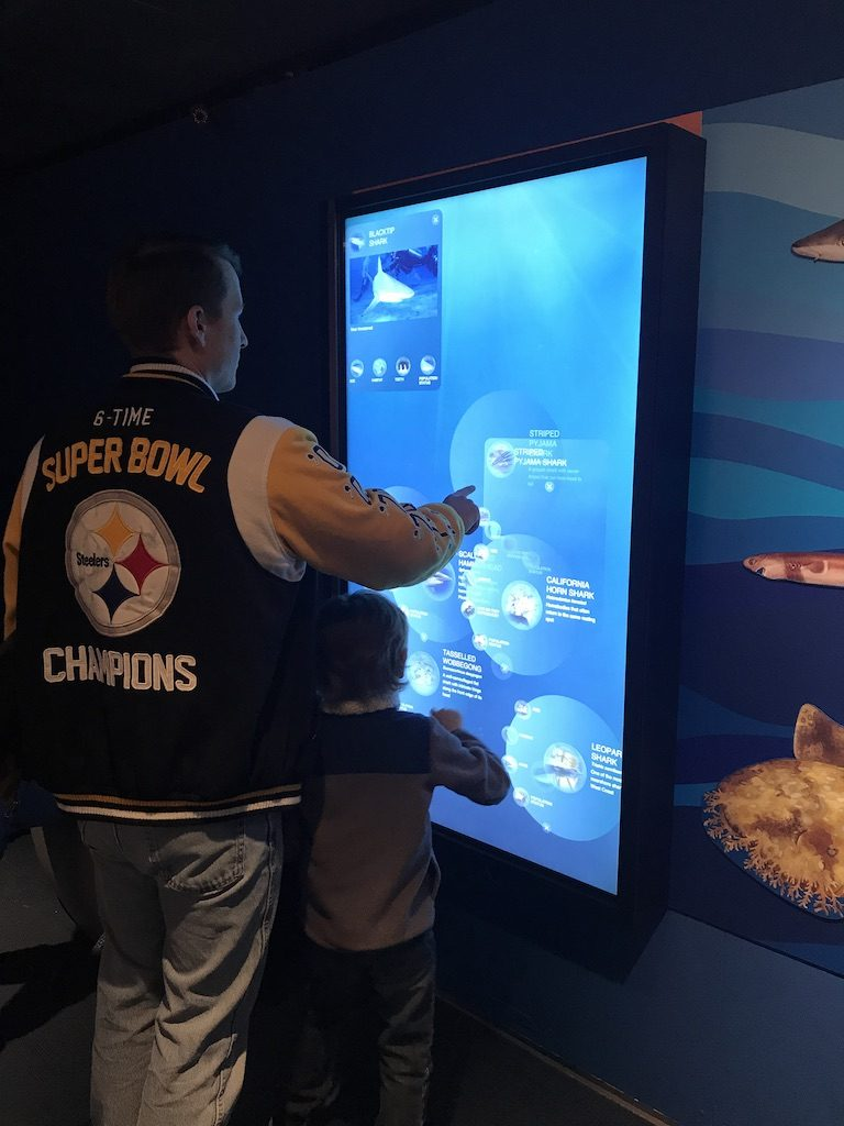 the new england aquarium has plenty of interactive stations to learn along your way