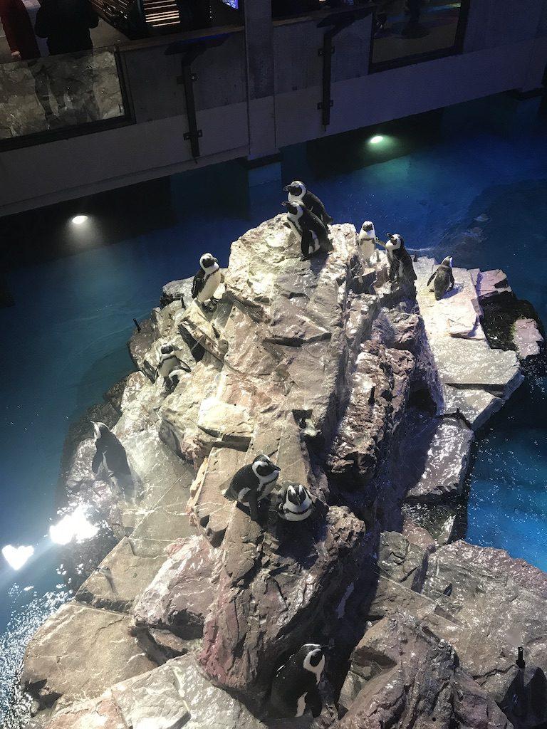 New England aquarium penguins