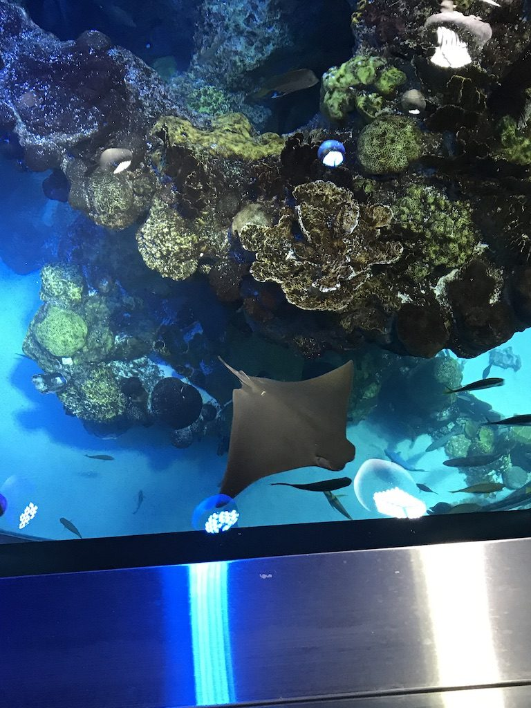 stingrays from the top of the giant ocean tank