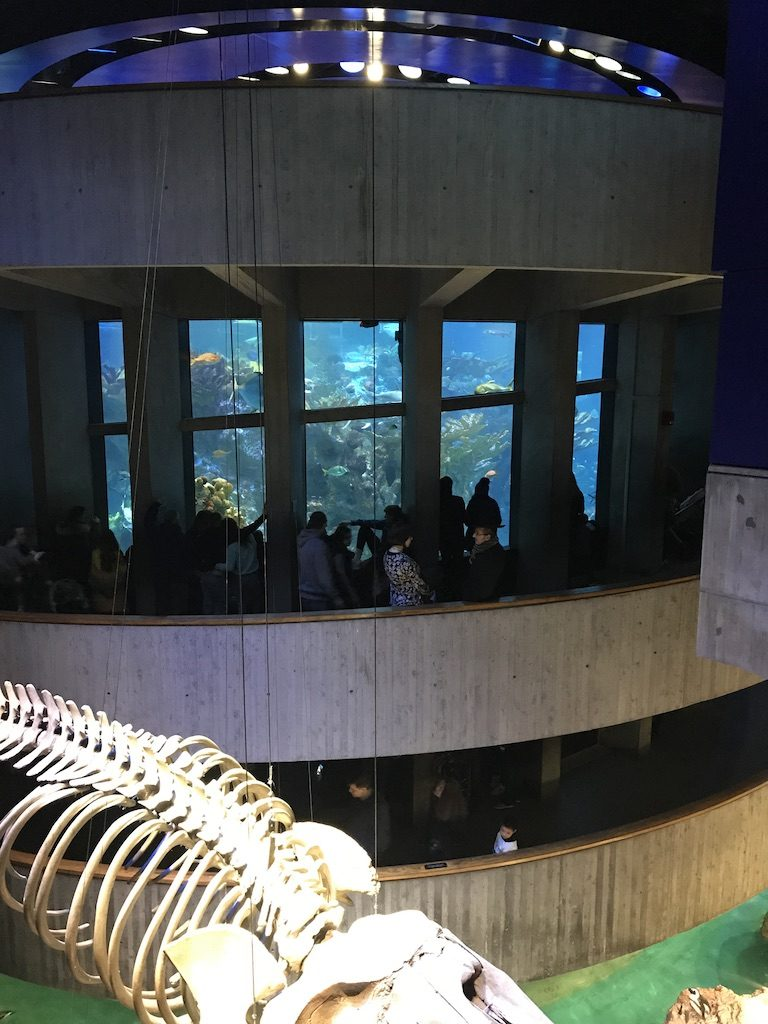 The New England Aquarium penguins and giant ocean tank