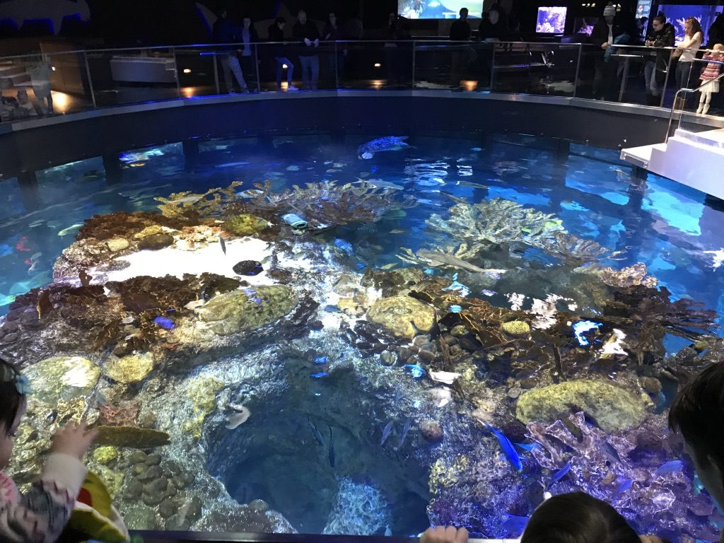 the view from the top of the giant ocean tank is amazing